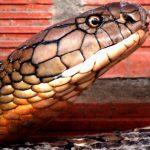 Chiêm bao thấy rắn đánh số mấy dễ về?