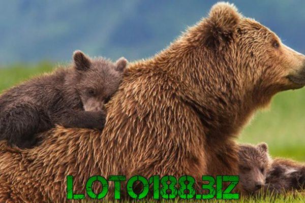 Mơ thấy gấu là điềm báo gì? Đánh số mấy may mắn?