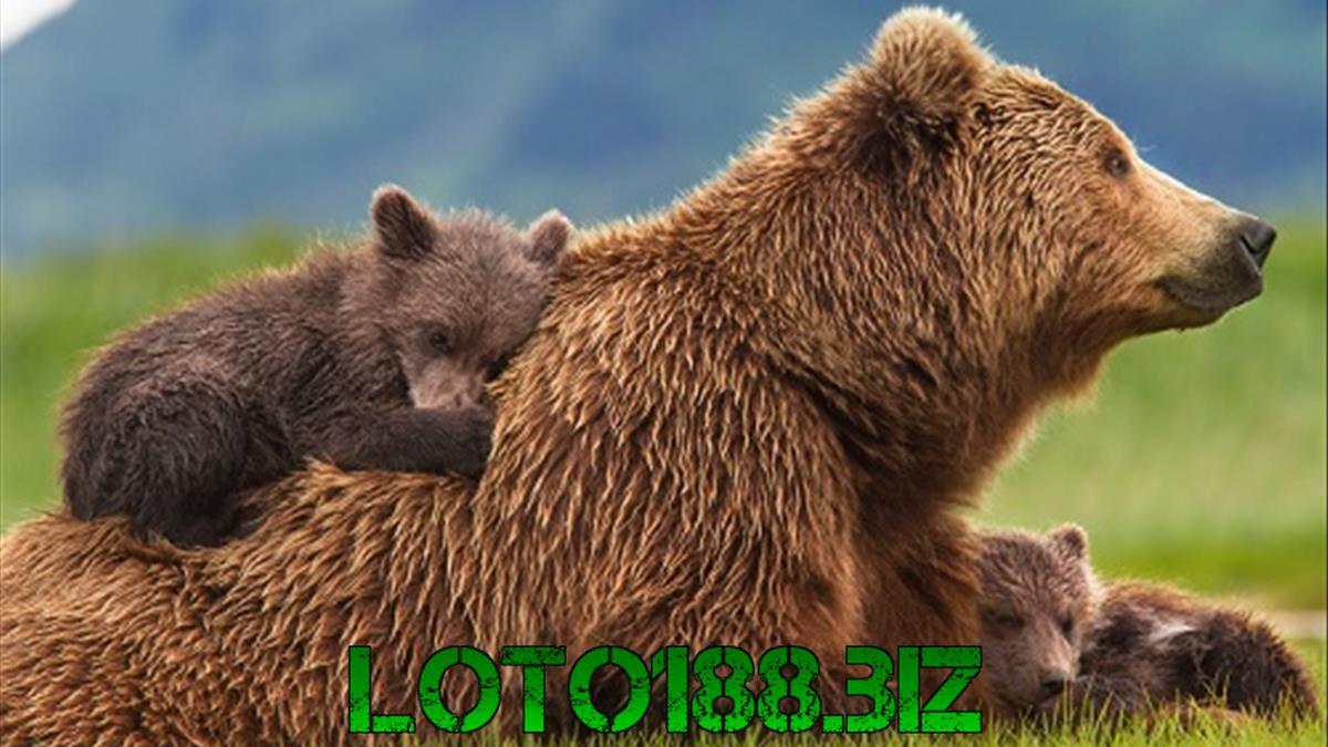 Giải mã giấc mộng ngủ mê thấy gấu